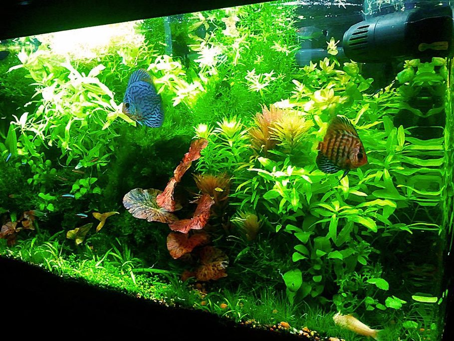 Most beautiful planted tanks all time for Fish tank with plants on top