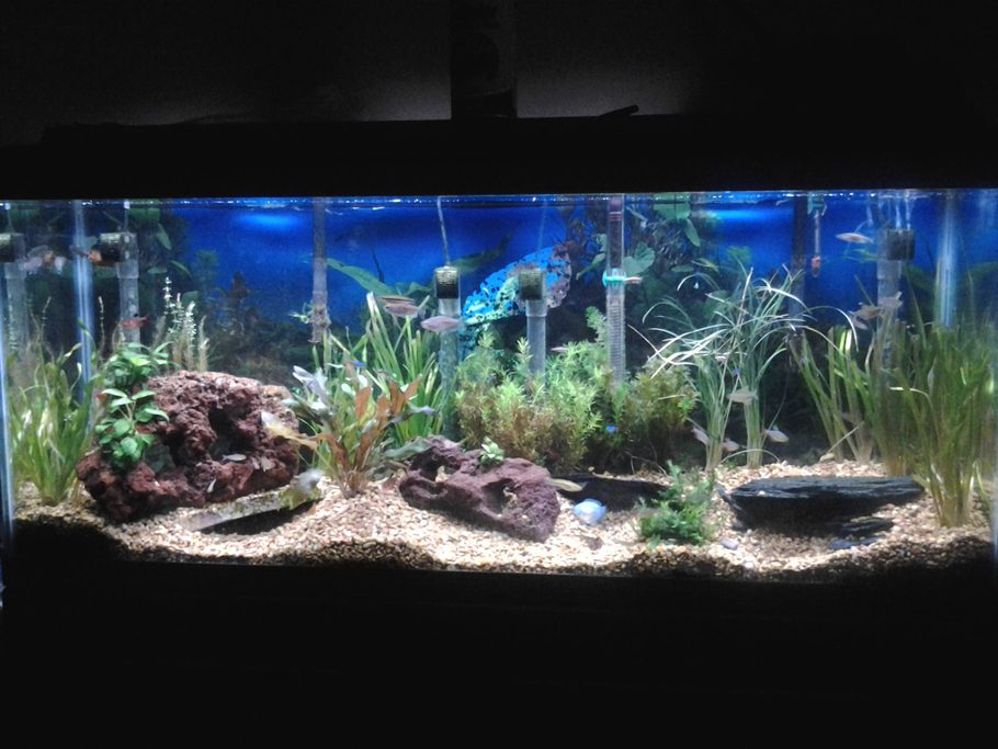 Andyman 39 s planted tanks details and photos photo 38793 for Lava rock fish tank