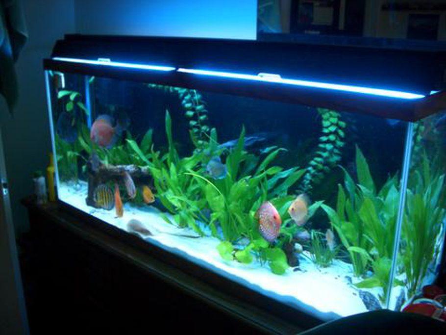 Happymudskipper 39 s planted tanks details and photos photo for Stingray fish tank