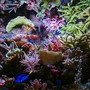 fish tank picture - fot nr2
